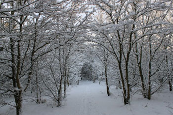 A photograph of a path in snowy woods.The path goes through an archway of trees.