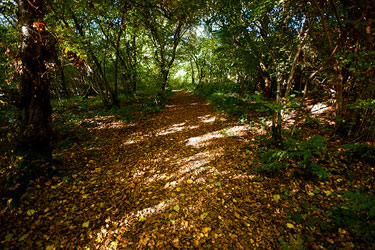 A photograph of a trail in the woods. The path is revealed by patches of sunlight