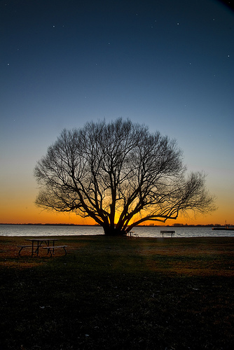 A photograph of a leafless tree by a lake at sunset; there is a park bench next to the tree