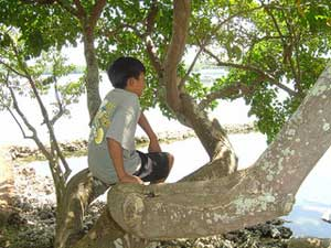 Boy sitting on low tree branches near water