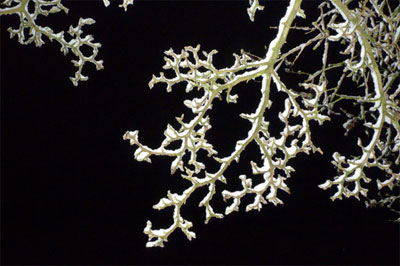 A photograph of snow covered tree branches on a winter night