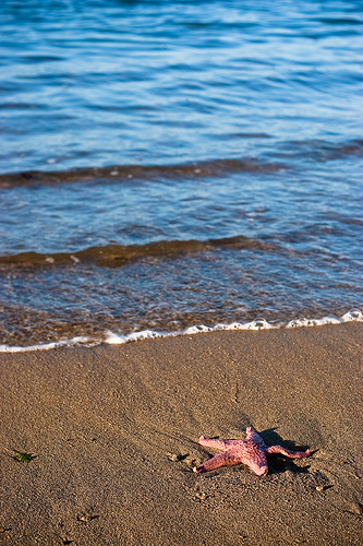 A starfish stranded on a beach