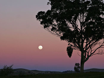 A photograph of a moonrise over hilly plains