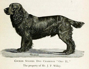 "Drawing of a black Cocker Spaniel; caption reads ""Cocker Spaniel Dog Champion 'Obo II,' the Property of Mr. J.P. Wiley."""
