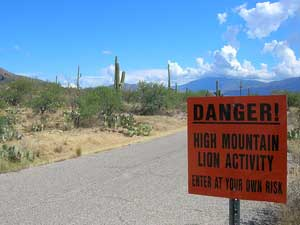 """A photograph of a sign in a park that reads: """"Danger! High Mountain Lion Activity. Enter at Your Own Risk"""""""