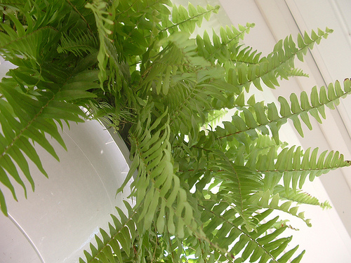 photo of a large fern hanging on a porch