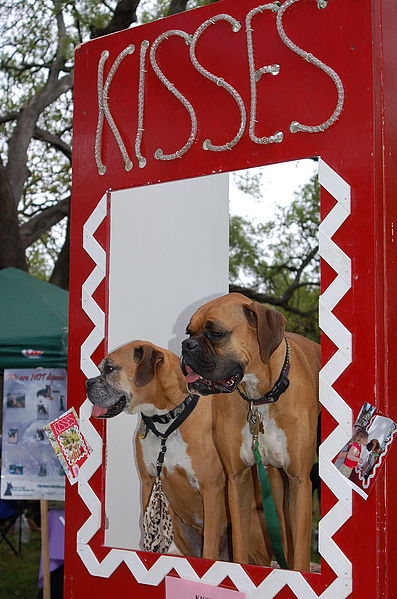 A photograph of a dog kissing booth at an animal shelter fund-raiser; there are two dogs in the booth window.