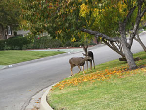 photo of deer by a road
