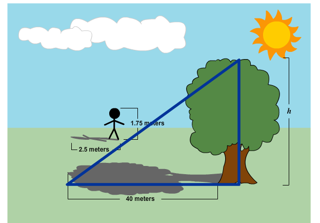 Graphic illustrating how a proportional relationship can determine the height of a tree.
